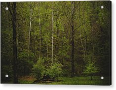 Acrylic Print featuring the photograph Somewhere In The Woods by Shane Holsclaw