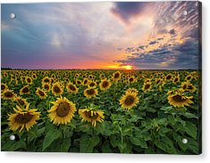 Acrylic Print featuring the photograph Somewhere Sunny  by Aaron J Groen