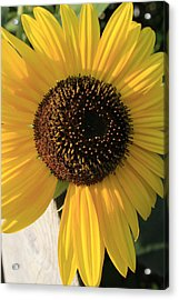 Son Of A Sun Acrylic Print by Alan Rutherford