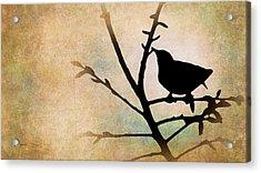 Song Bird Acrylic Print