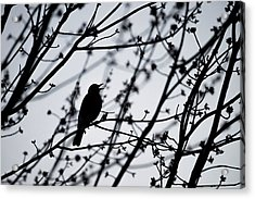 Acrylic Print featuring the photograph Song Bird Silhouette by Terry DeLuco