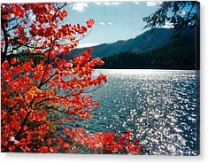 Song Of The Fall. Acrylic Print by Anastasia Michaels