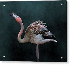 Song Of The Flamingo Acrylic Print