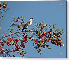 Acrylic Print featuring the photograph Song Of The Mockingbird by Peg Urban