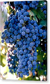 Sonoma Grapes Acrylic Print by Bart Edson