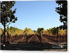 Sonoma Vineyards - Sonoma California - 5d19314 Acrylic Print by Wingsdomain Art and Photography