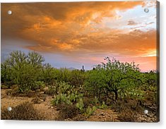 Acrylic Print featuring the photograph Sonoran Desert H11 by Mark Myhaver