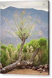 Sonoran Flora Acrylic Print