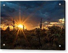 Acrylic Print featuring the photograph Sonoran Gold At Sunset  by Saija Lehtonen