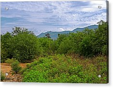 Acrylic Print featuring the photograph Sonoran Greenery H30 by Mark Myhaver