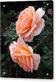 Sonya Roses Acrylic Print by Rosalie Scanlon