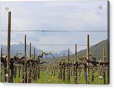 Soon Will Be Wine Acrylic Print by Natalia Luchinina