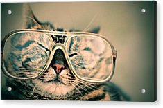 Sosy Cat With Glasses Acrylic Print by Fbmovercrafts