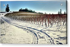 Soter Vineyard Winter Acrylic Print by Jerry Sodorff