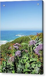 Sothern California Morning Acrylic Print by Timothy OLeary