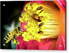 Acrylic Print featuring the photograph Soul Of Life by Karen Wiles