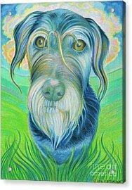 Soul Portrait Of Digby Acrylic Print