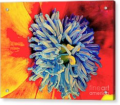 Soul Vibrations Acrylic Print