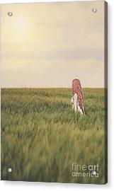 Soulshine Acrylic Print by Evelina Kremsdorf