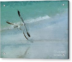 Sound Of Seagulls Acrylic Print by Claire Bull