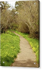 Acrylic Print featuring the photograph Sour Grass Trail by Art Block Collections