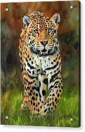 South American Jaguar Acrylic Print by David Stribbling