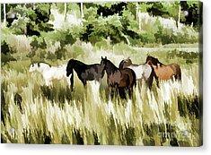 Acrylic Print featuring the mixed media South Dakota Herd Of Horses by Wilma Birdwell