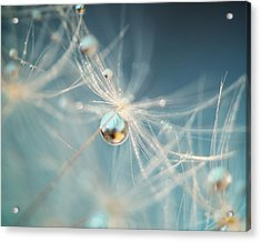 Acrylic Print featuring the photograph South Sea Pearl by Amy Tyler