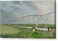 South Texas Irrigation Acrylic Print by Darla Rae Norwood