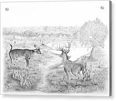 South Texas Stand Off Acrylic Print by Steve Maynard