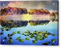 Acrylic Print featuring the photograph Southern Beauty by Debra and Dave Vanderlaan