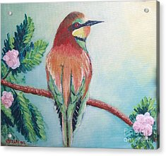 Southern Bee-eater Acrylic Print