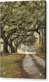 Southern Drive Live Oaks And Spanish Moss Acrylic Print by Dustin K Ryan