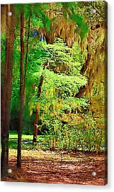 Acrylic Print featuring the photograph Southern Forest by Donna Bentley
