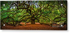 Angel Oak In Charleston Acrylic Print