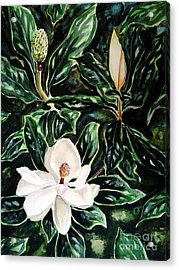 Southern Magnolia Bud And Bloom Acrylic Print
