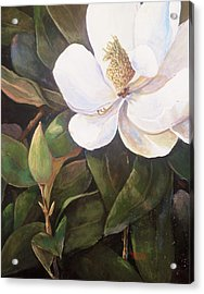 Southern Magnolia Acrylic Print by Jimmie Trotter