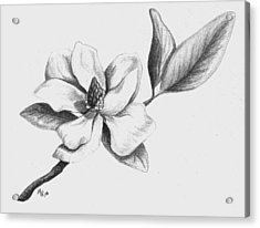 Southern Magnolia Acrylic Print by Mary Rogers