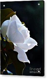 Southern Magnolia Profile Acrylic Print