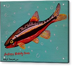 Southern Redbelly Dace Acrylic Print by Emily Reynolds Thompson