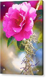 Acrylic Print featuring the digital art Southern Rose by Donna Bentley