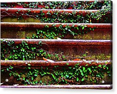 Southern Ivy Steps Acrylic Print by JAMART Photography