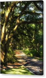 Southern Sunshine Acrylic Print by Mel Steinhauer