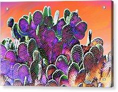 Southwest Desert Cactus Acrylic Print