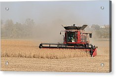Soybean Harvest In Fremont County Iowa Acrylic Print
