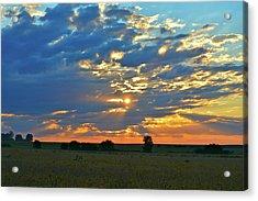 Soybean Sunrise Acrylic Print
