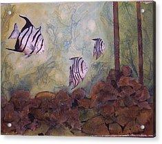 Spadefish In Fl Acrylic Print