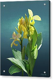 Spade's Yellow Canna Lily Acrylic Print by Spadecaller