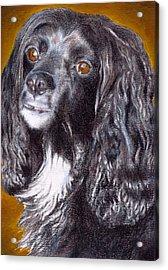 Spaniel Eloquence Acrylic Print