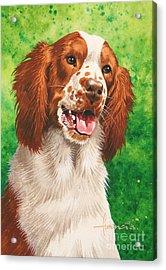 Spaniel Acrylic Print by John Francis